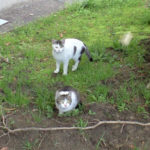 猫のアカデミア